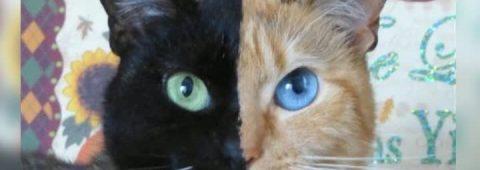 Cea mai neobişnuită pisică face senzaţie pe internet VIDEO – RomaniaTV.net